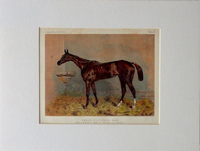 Emblem, a Steeplechase Horse