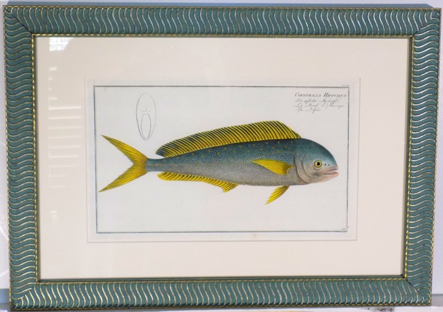 Yellowfin Tuna by Bloch, 1783 (Custom Framed)