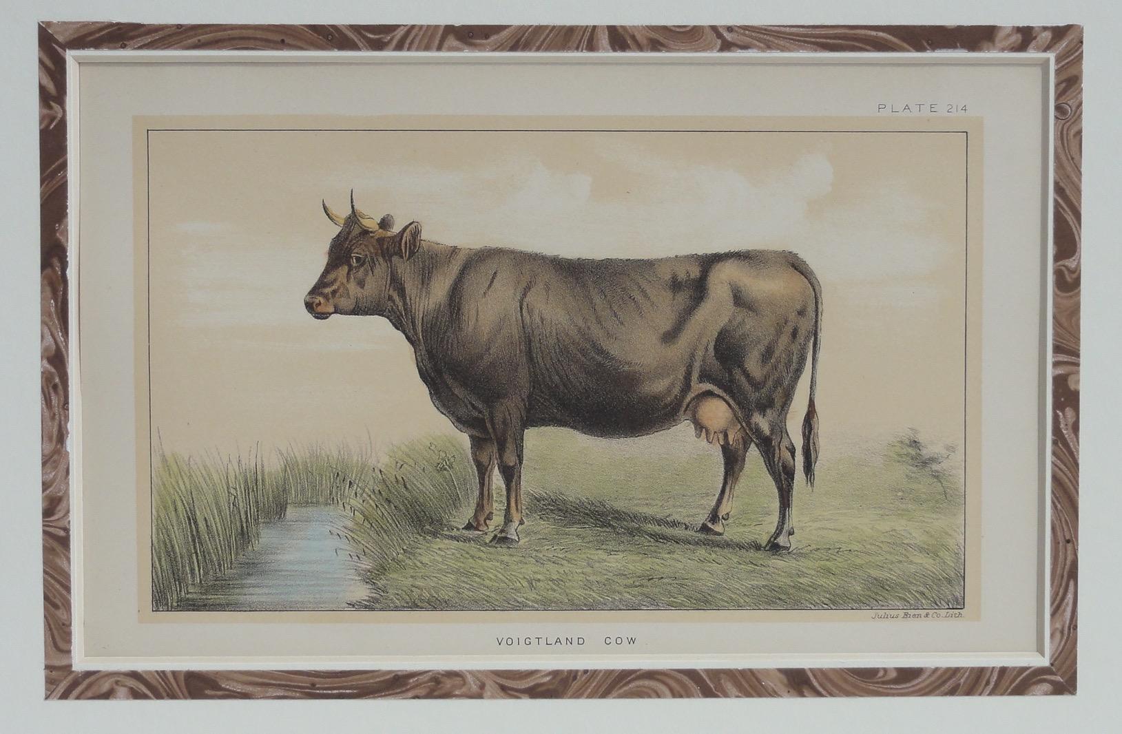 Voigtland Cow