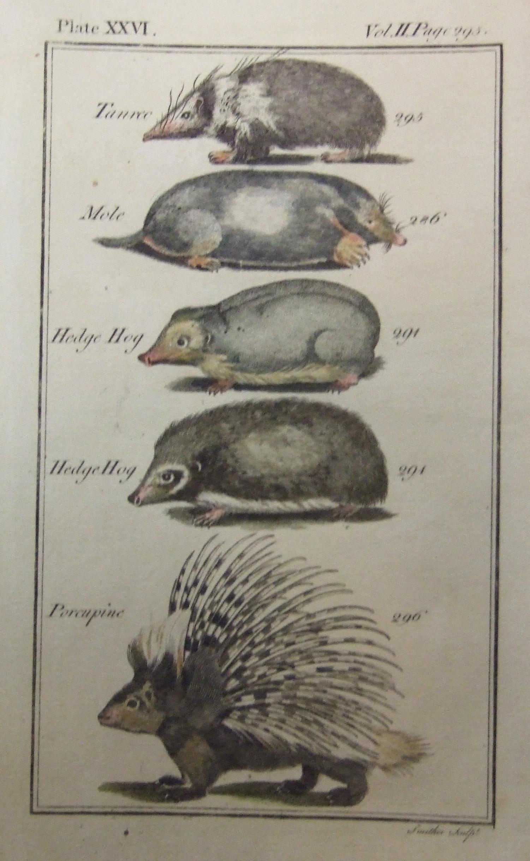 Tanrec, Mole, Hedge Hog, Porcupine