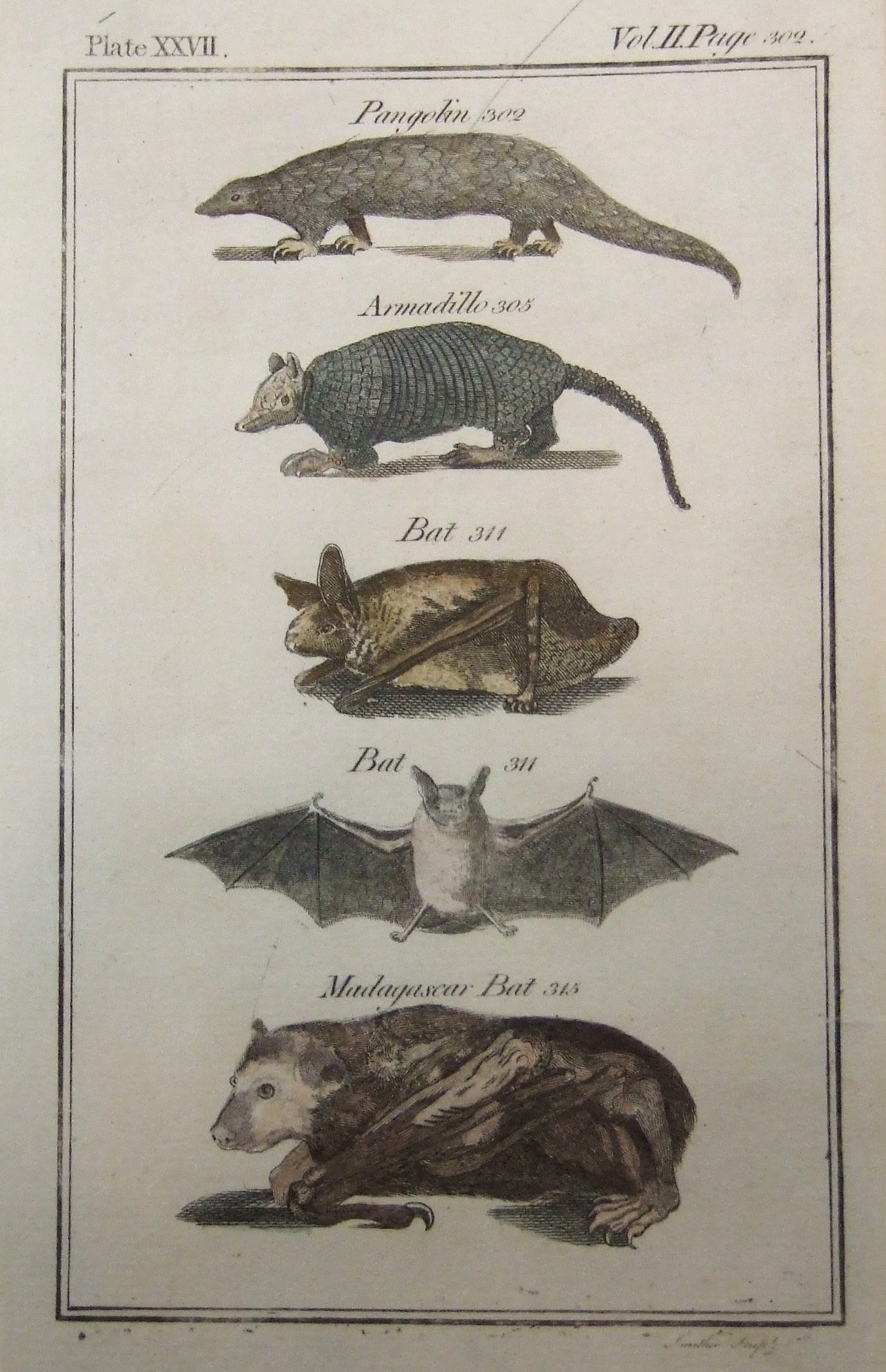 Pangolin, Armadillo, Bat, Madagascar Bat