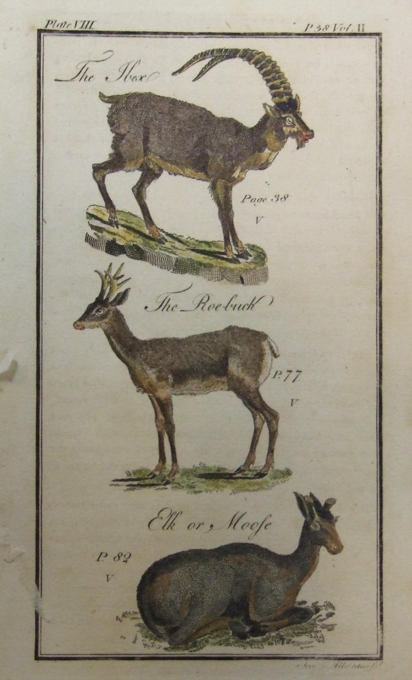 Mountain Goat, Roe-Buck, Elk or Moose