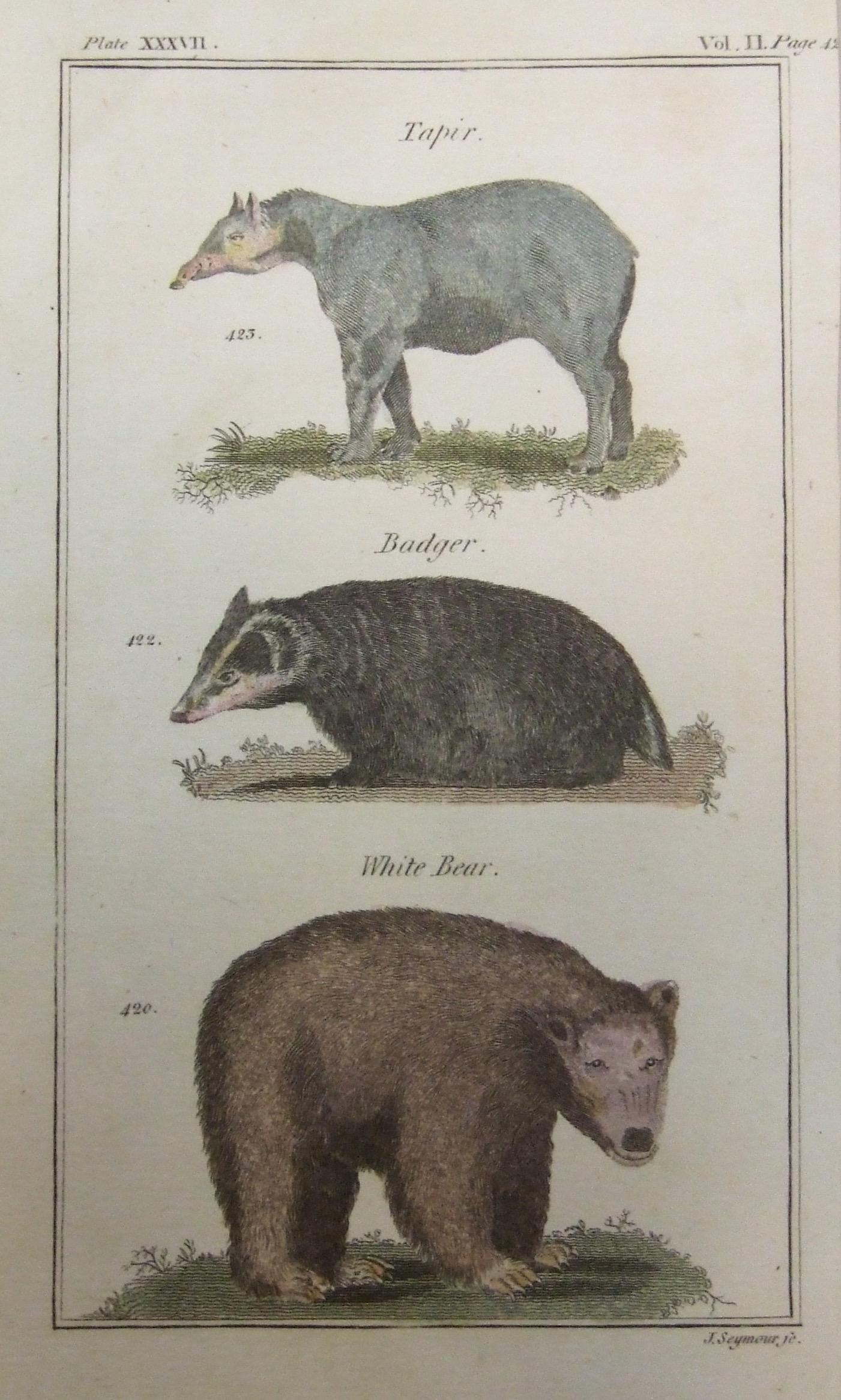 Tapir, Badger, White Bear
